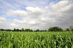 Farmland Crops. Field of Crops on Farmland Stock Photography