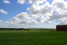 Farmland in Denmark. Green field on farm in Skanderborg, Denmark Stock Photo