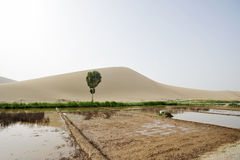 Farmland in desert. Farmland in Singing Sands Mountain of Chin Stock Photography