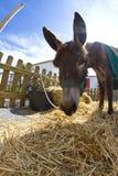 Farmland and  Donkey Royalty Free Stock Images