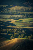 Farmland dotted with Poplars and other trees viewed from Te Mata Stock Image