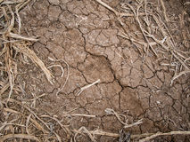 Farmland in a drought. Pants dying royalty free stock images