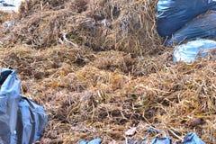Farmland. Dry straw has uses animal food or compost Stock Image