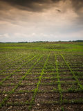 Farmland at Dusk Royalty Free Stock Photography
