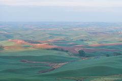 Farmland. In early morning, Steptoe Butte State Park, Oakesdale, Washington Stock Photography