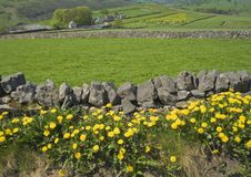 Farmland field dry stone wall Stock Image