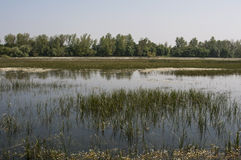 Farmland flooded Stock Images