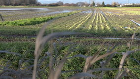 Farmland Flooding stock video