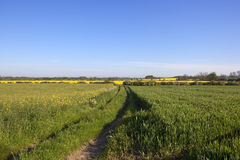 Farmland footpath in springtime. English landscape in springtime with a footpath through colorful flowering arable fields under blue sky Royalty Free Stock Image