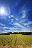 Farmland furrows in perspective with blue skies. And a high sun Stock Images