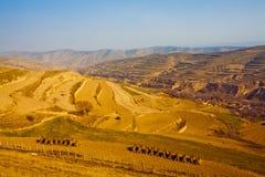 Farmland of gansu china. Farmland of loess plateau in spring Stock Images