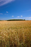 Farmland in Germanay Royalty Free Stock Photography