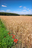 Farmland in Germany Stock Photography