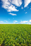 Farmland in Germany Stock Image