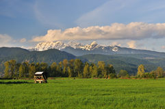 Farmland and Golden Ears Mountain, Pitt Meadows Royalty Free Stock Photography
