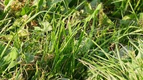 Farmland grasses move  wind stock footage