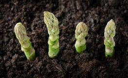 Farmland with green asparagus Stock Photos