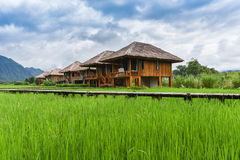 Farmland. With green field and house Nature view Royalty Free Stock Image