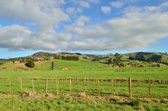 Farmland. A green field in a rural setting Stock Photo