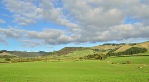 Farmland. A green field in a rural setting stock photos