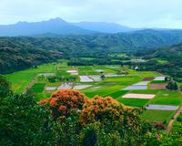 The farmland of hawaii Royalty Free Stock Images