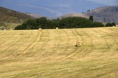 Farmland Haystack america Stock Images