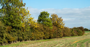 Farmland hedge in autumn. Farmland mixed hedge with autumnal colour and arable field edge Stock Photos