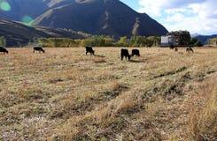 Farmland at high altitude Royalty Free Stock Photo