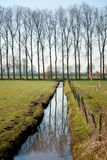 Farmland in Holland. Farmland with trees and ditch in Holland Royalty Free Stock Photo