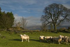 Farmland in the Lake District Stock Photography