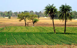 Farmland landscape natural beauty. Beautiful farmland and landscape, narsinghgarh, Madhya Pradesh India Royalty Free Stock Photo