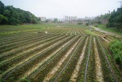 The farmland landscape Royalty Free Stock Photo