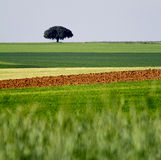 Farmland Royalty Free Stock Photo
