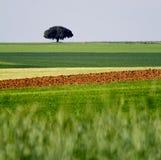 Farmland. Landscape with a tree Royalty Free Stock Photo