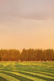 Farmland in late afternoon light. Royalty Free Stock Photo