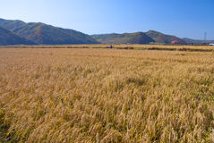 Farmland. In Liaoning Province, China Stock Photo