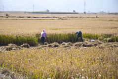 Farmland. In Liaoning Province, China Royalty Free Stock Images