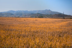 Farmland. In Liaoning Province, China Royalty Free Stock Photography