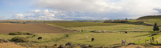 Farmland at Maryhill Washington Panorama Royalty Free Stock Images