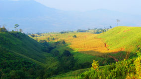 Farmland mountain. Green in thai land Royalty Free Stock Image