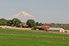 Farmland and Mt. Hood Stock Photo