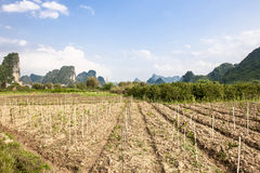Farmland, Limestone Rocks in Yangshuo, China Royalty Free Stock Image