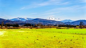 Farmland near the Matsqui at the towns of Abbotsford and Mission in British Columbia, Canada. With Mount Baker in the background stock images