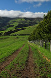 Farmland of New Zealand Royalty Free Stock Images
