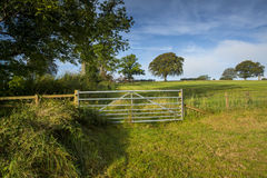 Farmland. Open farmland in southern Scotland, showing a grass meadow, tree line, and a closed farm gate, taken in early morning sunlight with a clear blue sky Royalty Free Stock Image