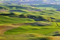 Farmland in Palouse Washington Stock Images