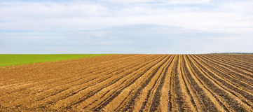 Farmland panorama - brown field Royalty Free Stock Images