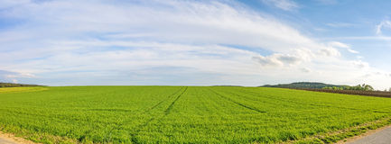 Farmland panorama - green wheat field Royalty Free Stock Photos