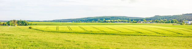Farmland panorama - wheat field Royalty Free Stock Images