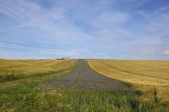 Farmland with phacelia Royalty Free Stock Photo
